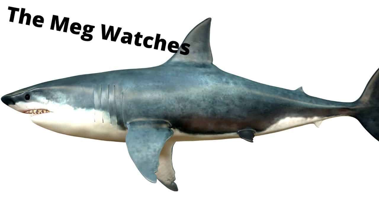 The meg featured image
